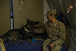 Dog handler's homegrown values, environment mirror her K-9 career 130424-F-SI788-303.jpg