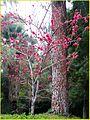 Dogwood Tree 2-9-14 (12505249825).jpg