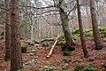 Donard Forest, Newcastle (5) - geograph.org.uk - 640777.jpg
