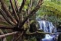 Dormant tree.jpg