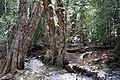 Dove Lake Circuit Walking Track, Cradle Mountain - Lake St Clair National Park 63.jpg