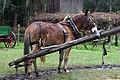 Dudley Farm mule.jpg