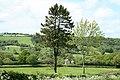 Dunkeswell, Madford valley - geograph.org.uk - 174130.jpg