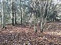Earthwork enclosures, Oare Common, Berkshire 03.jpg