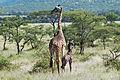 Eastern Serengeti 2012 06 01 3295 (7522729126).jpg