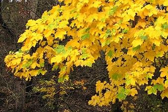 El otoño en el Parque Natural de la Sierra de Huetor.jpg