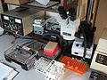 Electrophoresis - Setup for running agarose gel.jpg