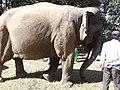 Elephant20171111 122231.jpg