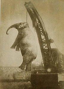 Elephantmary.jpg