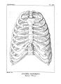 Encyclopédie méthodique - Systeme Anatomique, Pl13.png