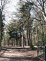 Entrance to Felthorpe Forest Nursery - geograph.org.uk - 745557.jpg