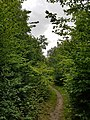 Epping Forest 20170727 112029 (49374734901).jpg