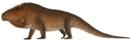 Erythrosuchus africanus