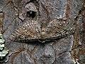 Eupithecia pusillata - Juniper pug - Цветочная пяденица еловая (40241598954).jpg