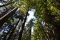Eureka-Arcata-Fortuna, CA, CA, USA - panoramio (7).jpg