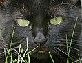 Evil eye (29448967135).jpg