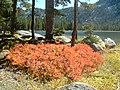 Fall Color at Wallowa Lake, Wallowa Whitman National Forest (26195909284).jpg