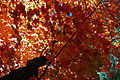 Fall colors on the top of Mogollon Rim (4015302500).jpg