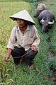 Farming. Vietnam 2007. Photo- AusAID (10694818546).jpg