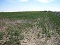Farmland - geograph.org.uk - 389237.jpg