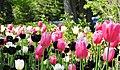 Festival de los Tulipanes en Ottawa, Canadá. - panoramio.jpg