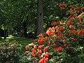 Ffm ostpark rotblumens halb.JPG