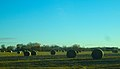 Field of Round Bales - panoramio.jpg