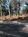 Fife Lake Cemetery.jpg