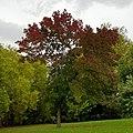 Finsbury Park 20171002 153534 (49370210557).jpg