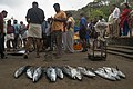 Fish for sale, Fort Kochi, India, 2 March 2019.jpg