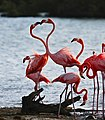 Flamingo heart 12-2020.jpg