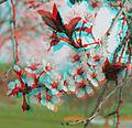 Flickr - jimf0390 - JimF 04-19-10-0022a tree blossoms.jpg