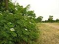 Flora della Riserva Naturale Valle dell'Aniene 7.JPG