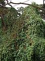 Flora of Tanzania 4434 Nevit.jpg