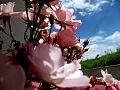 Flores Ipiales.jpg