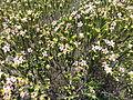 Flores na Chapada Diamantina.jpg