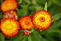 Flower-115.jpg