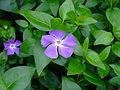 Flower-center142333.jpg