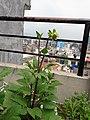 Flower20180523 101250.jpg
