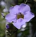 Flower (3203632595).jpg