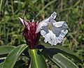 Flower (6840805278).jpg