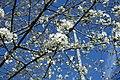 Flower @ Jardin Pierre Adrien Dalpayrat @ Paris (33491093642).jpg