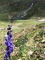 Flower at ratti gali lake view.jpg