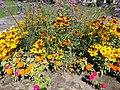 Flower bed, yellow-orange People's Park, 2016 Kőbánya.jpg