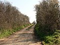 Footpath - geograph.org.uk - 377333.jpg