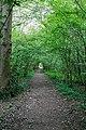 Footpath through Swanwick Wood - geograph.org.uk - 464674.jpg