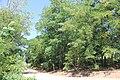 Forest i Jelenča.jpg