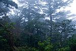 Forest in Yakushima 40.jpg