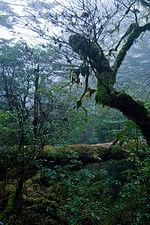 Forest in Yakushima 42.jpg