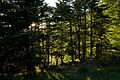 Forest in Yatsugatake 20.jpg